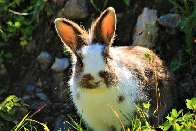 Rabbit2020